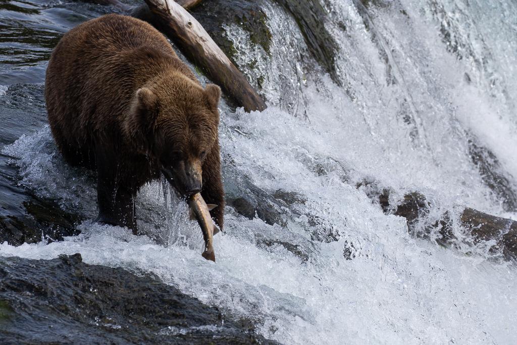 Brooks Falls in Katmai National park