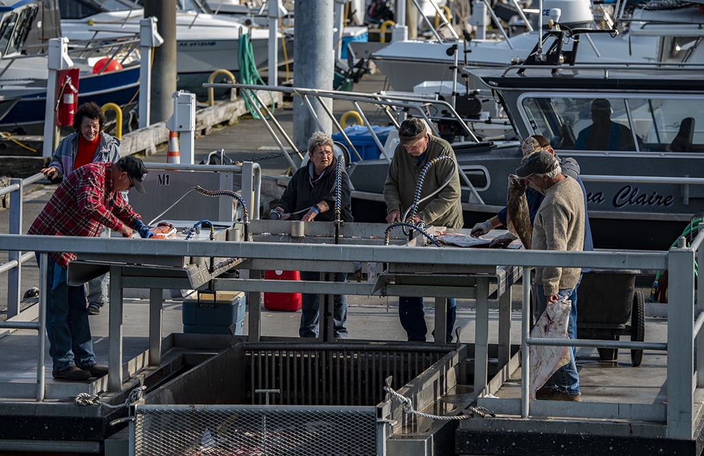 fishermen gutting fish in Valdez Alaska
