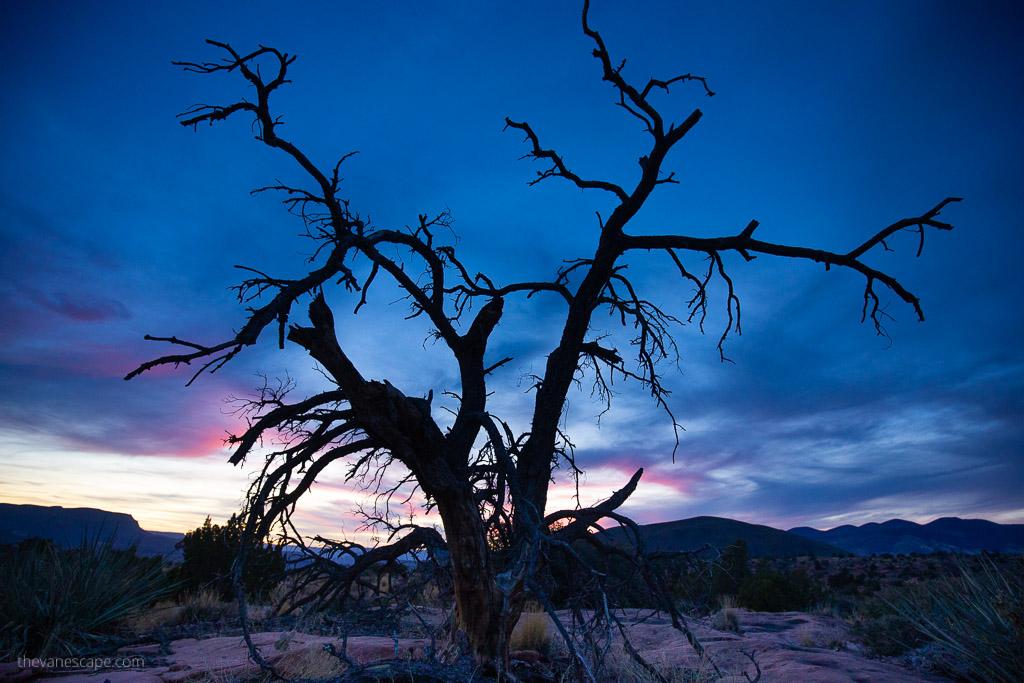 tree at sunset Toroweap Grand Canyon National Park