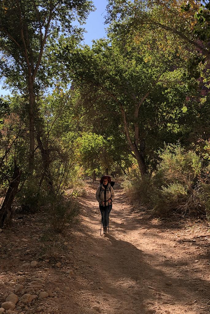 oasis on the havasu falls hike