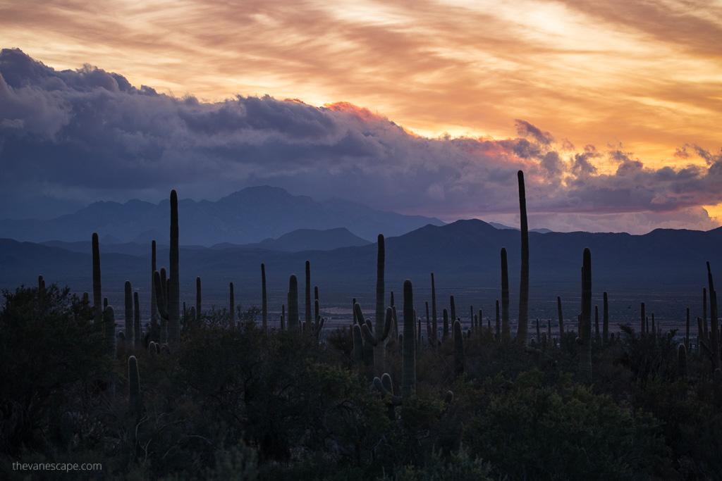 sunset in Saguaro National Park Arizona Road Trip Itinerary