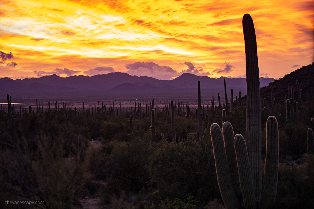 sunset in Saguaro National Park West