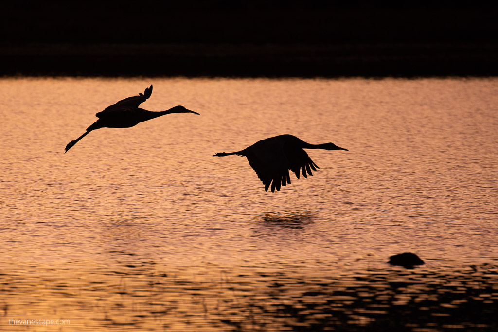 Landing Cranes - Wildlife Photography Guide