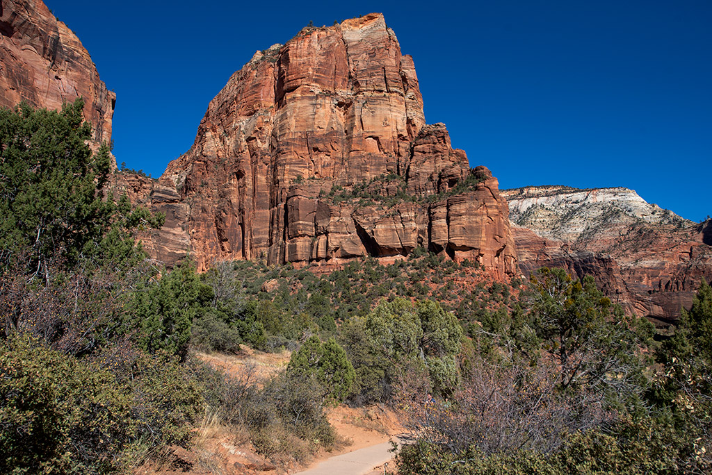The Angels Landing Trail in Zion