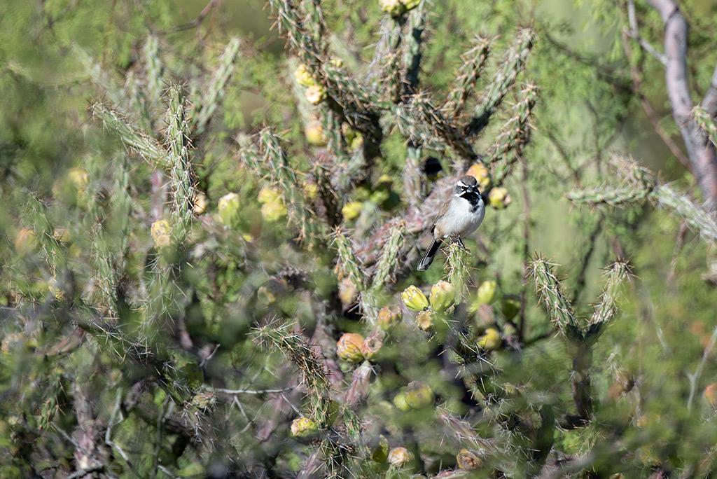 birds watching Saguaro National Park