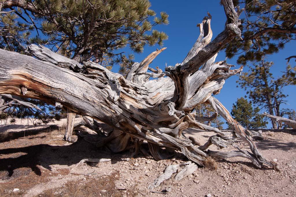 Bryce Canyon hikes
