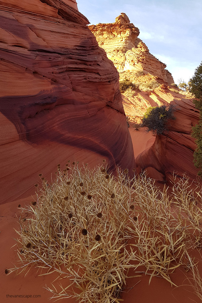 coyote buttes formations