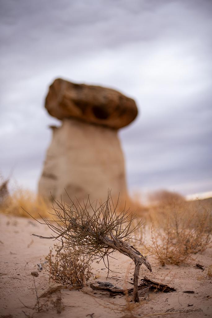Paria Rimrock Toadstool Hoodoos