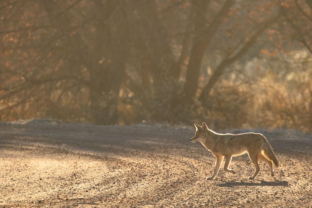 Wildlife New Mexico