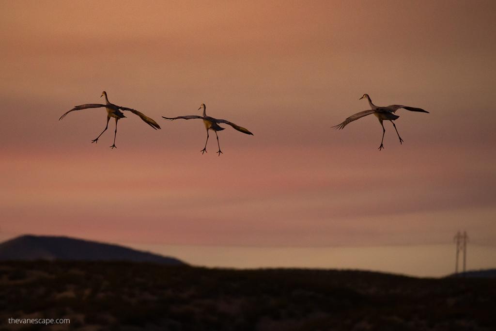 Bosque Del Apache Festival Of The Cranes