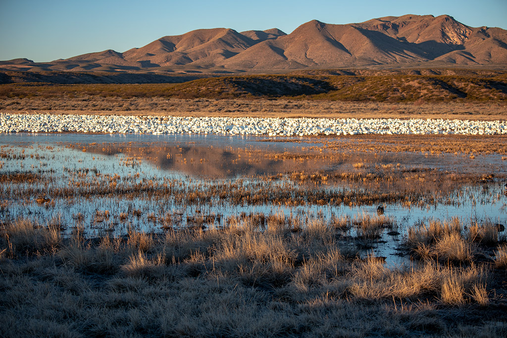 Bosque del Apache National Wildlife Refuge in New Mexico