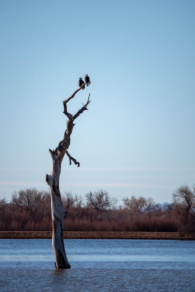 Bird watching in Bosque del Apache