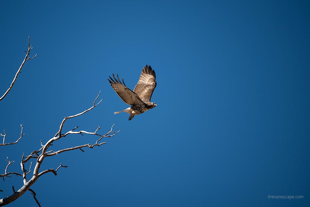 wildlife Utah Photography Travel Guide