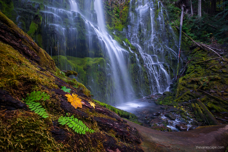 Oregon Proxy Falls