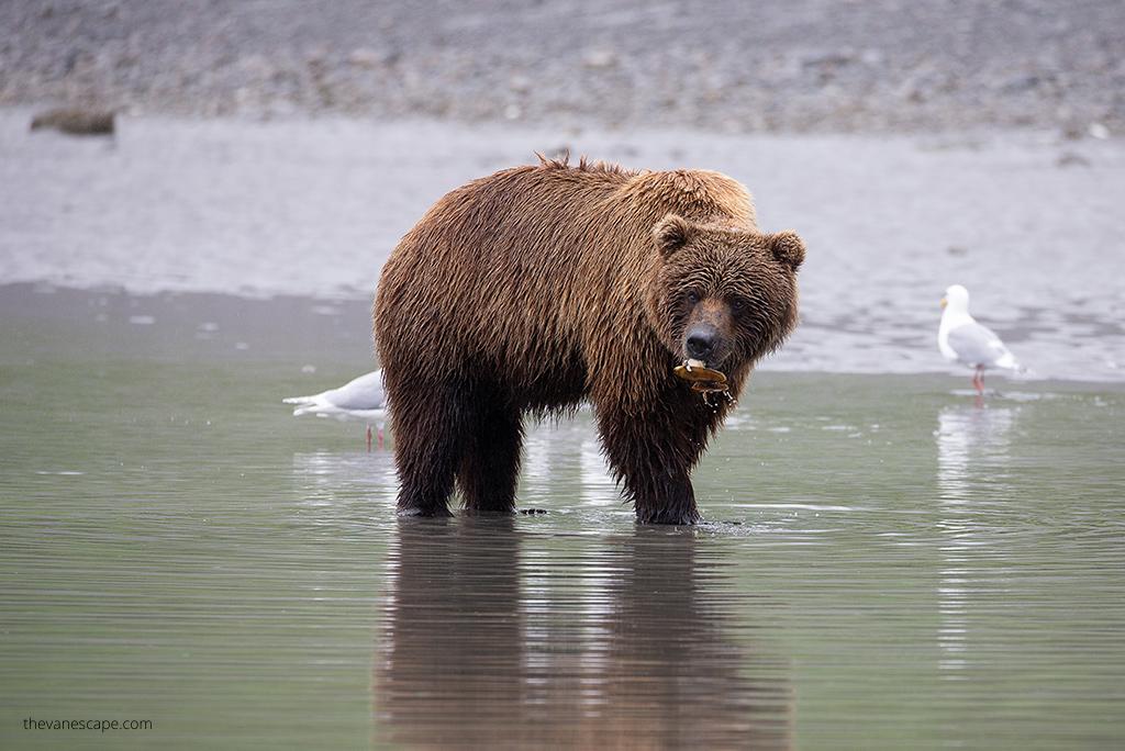 10 days Alaska Itinerary for 2021
