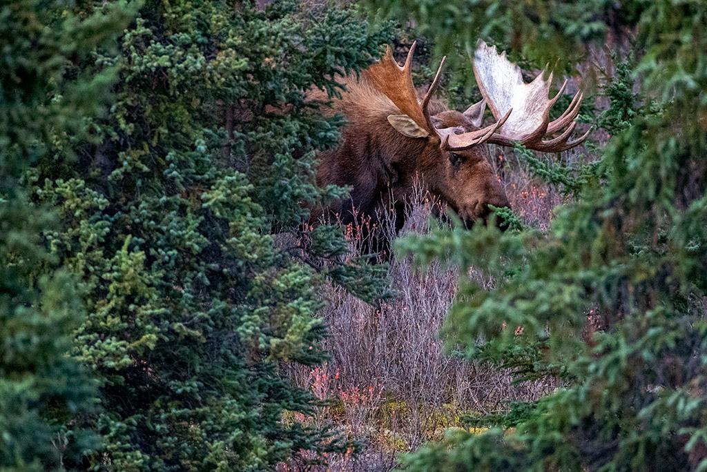 10 Days Alaska Itinerary - Denali