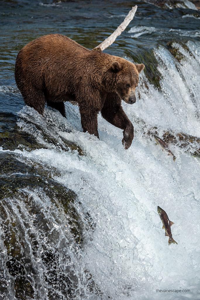 Alaska Itinerary Katmai National Park