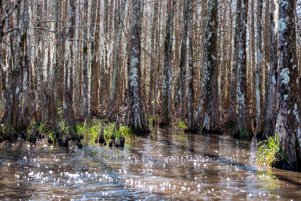 Bayou Swamp Tours in Louisiana