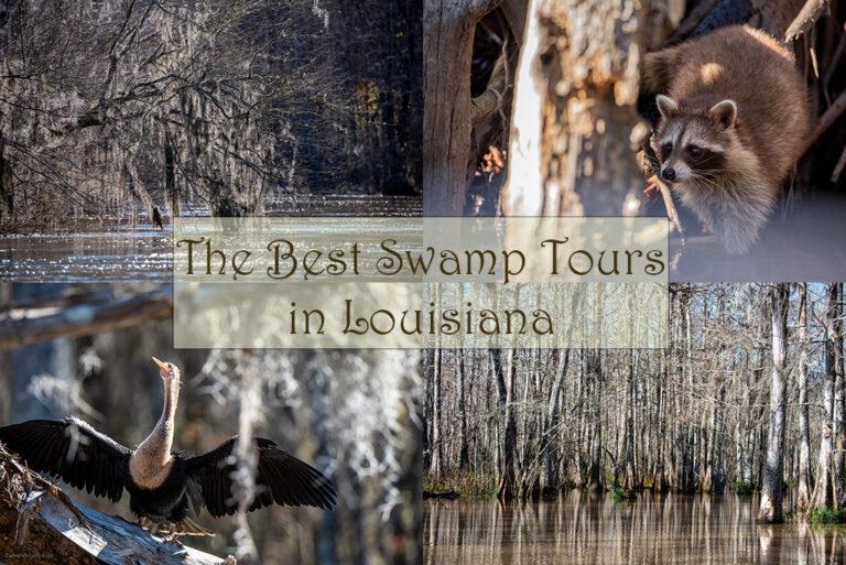 The Best Bayou Swamp Tours in Louisiana