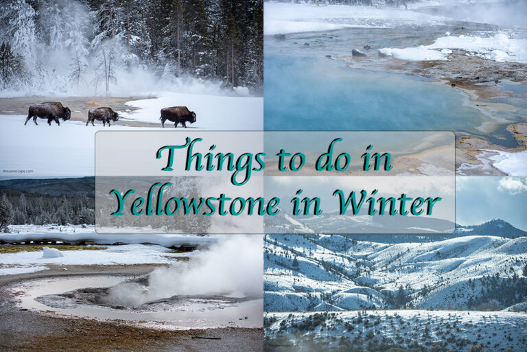 Things to do in Yellowstone in Winter