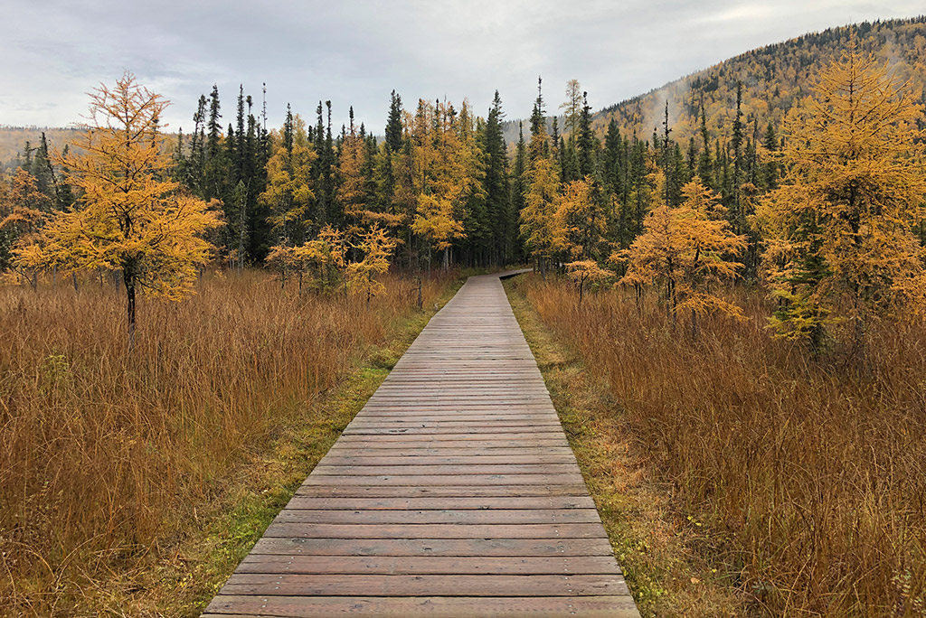 Liard River Hot Springs campground